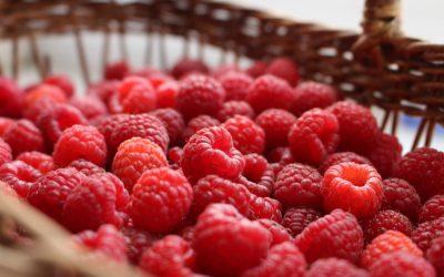 Régi gyümölcsfajták nyomában